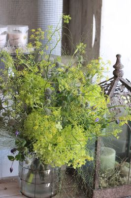 wild fennel bouquet
